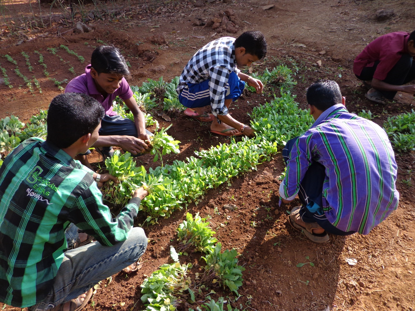 Agricultural Practical on Vegetable Cultivaton
