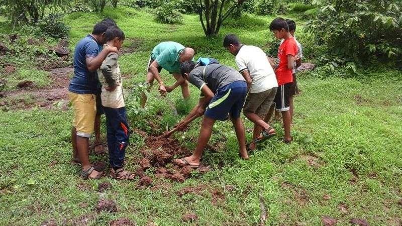 Planting Medicinal Herbs